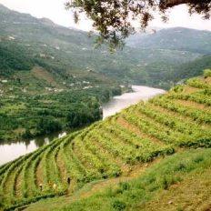 Um belo vale na paisagem do Reino Maravilhoso segundo Miguel Torga