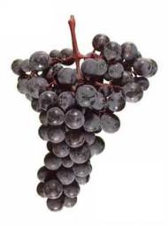 """ALICANTE BOUSHCET Casta tinta criada por Henry Bouschet, entre 1865 e 1885 em França, resultante do cruzamento entre as castas Petit Bouschet e a Grenache. É uma casta """"tintureira"""" (com polpa vermelha), apresentando bagos redondos de cor negra e cachos grandes.Plantada no sul da França, principalmente na região do Languedoc, localmente nunca foi uma casta de renome. Em Portugal ganhou notoriedade pela produção de vinhos de muito boa qualidade, nomeadamente no Alentejo, onde o """"terroir"""" local (Invernos frios e Verões quentes e secos, solos profundos e não muito pobres, com disponibilidade de água ao longo de todo o ciclo) lhe transmite as condições necessárias para o seu desenvolvimento pleno.Esta casta produz vinhos de cor densa, aromas ligeiramente vegetais, grande concentração de taninos, bom equilíbrio de acidez e enorme capacidade de envelhecimento."""