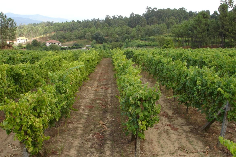 Comissao Vinhos Verdes 025