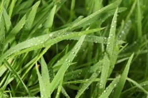 chuva fresca