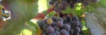 Vinha (40) 512_172