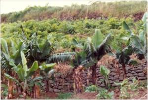 viticultura-em-ambiente-exotico