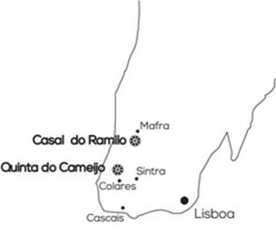 C RAMILO 1
