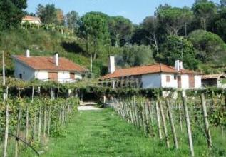 quinta_da_prova_casa_rural_en_ponte_da_barca_viana_do_castelo_99187228806134448