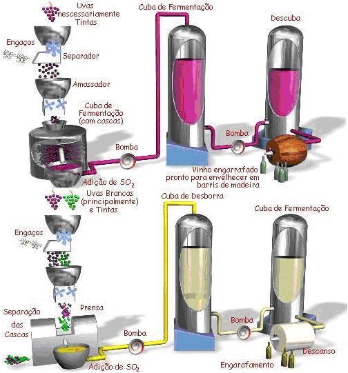 Como Se Produz Vinho - Produção e Fermentação, linhas gerais