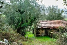 davallia-oliveira-01
