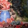 vigne-raisins-grappes-jarre