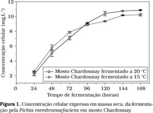 Fermentação Mosto Chardonnay
