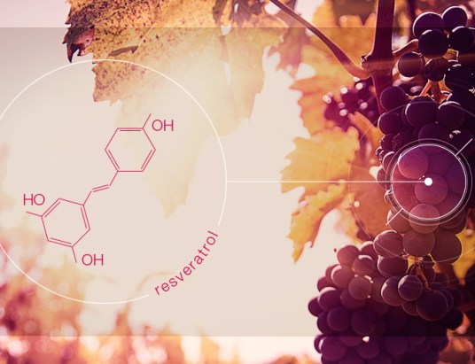 resveratrol_polifenol_do_vinho_3