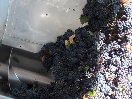 extracao-vinhos-tintos