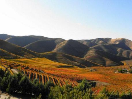 alto-douro-vinhateiro-patrimonio-mundial-26