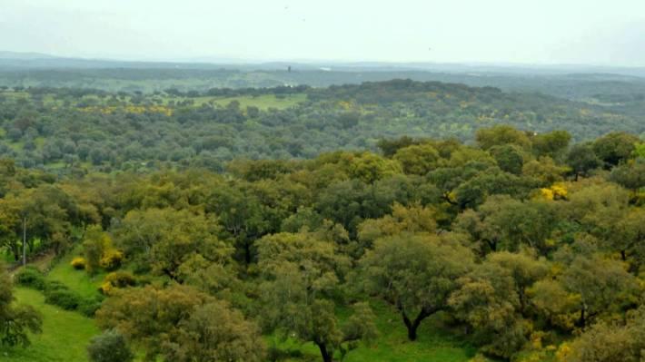 crato-landscape
