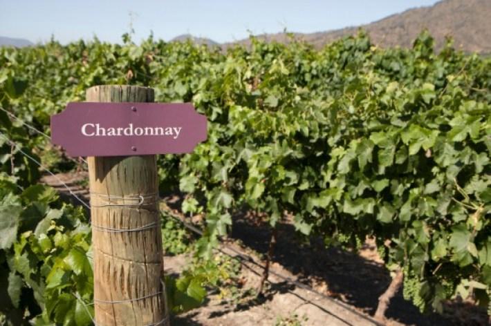 Portugal entre os 10 maiores países produtores de vinho