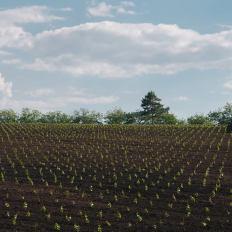 cricova-winery-vinhas-2