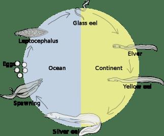 ciclo-reprodutivo