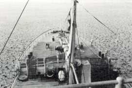 companhia-de-pescarias-lisbonense-3
