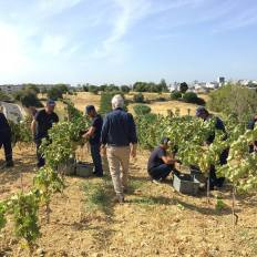 1-dia-no-parque-viticola-de-lisboa-3
