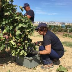 1-dia-no-parque-viticola-de-lisboa-8