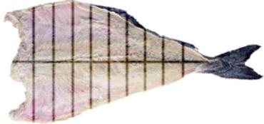 cortes-bacalhau-tipo-saithe_medium