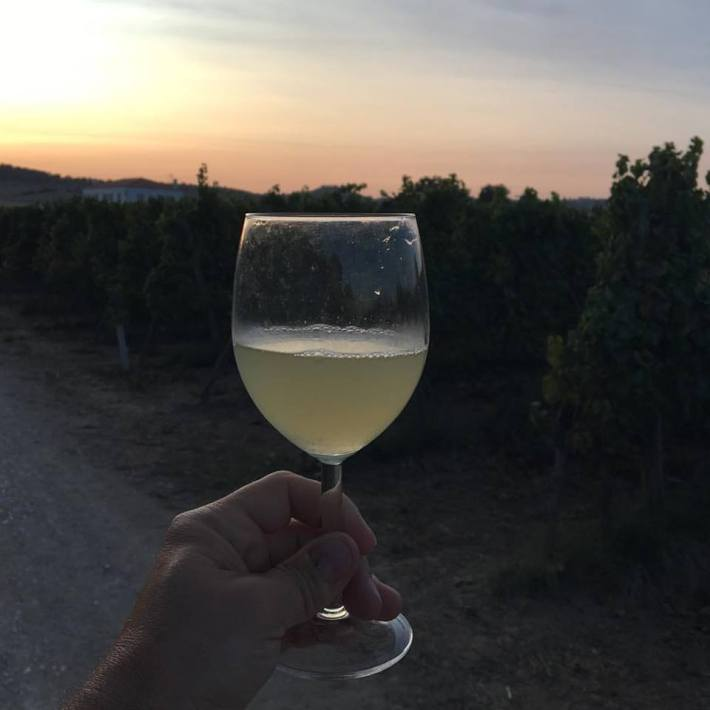 Primeiro Mosto de Chardonnay