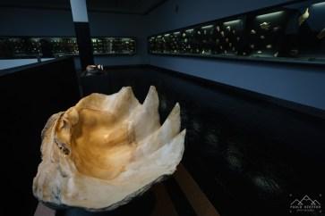 museu-maritimo-ilhavo-conchas