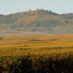 vignes_trois_chateaux