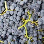 CM Wines TN 10