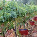 CM Wines TN 12