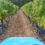 CM Wines TN 9