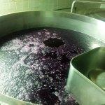 Cabernet-Sauvignon em plena fermentação