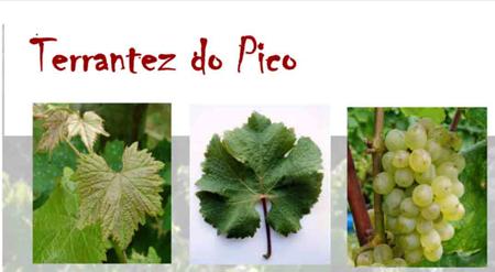 Terrantez-do-Pico