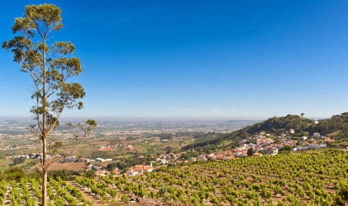 IMG360_Casal_Figueira_TTS_15_Soils,_Vineyard_&_Scenes_(2)