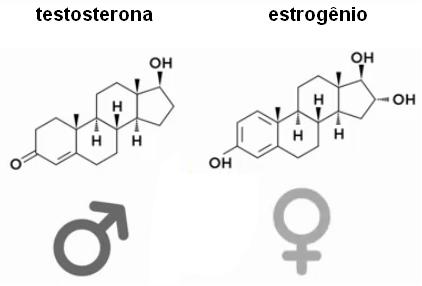 estrogenio e testoesterona