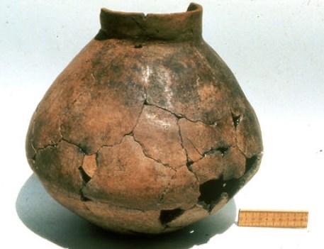 worlds-oldest-wine