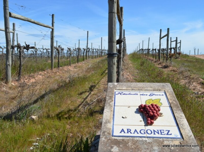 Aragonez-grape-vines-Herdade-dos-Grous-Alentejo-Portugal