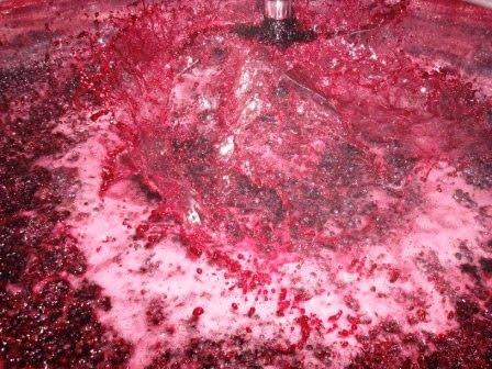 fermentação 4