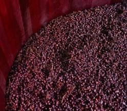 tanoaria rosseau 2