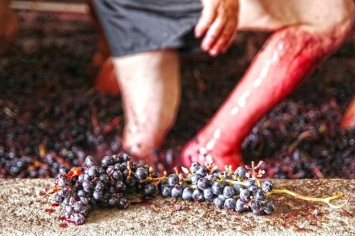 Pés descalços que sentem o esmagar do fruto