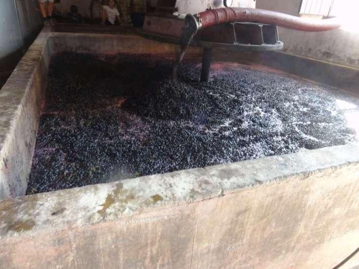 Mosto em lagar de pedra do produtor Vale Zias, no Cercal - concelho do Cadaval
