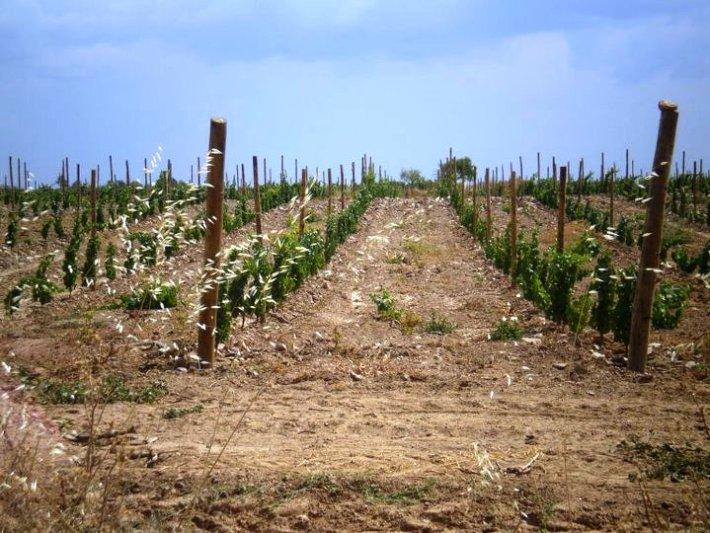 Os Vinhos DOC da Beira Interior na Sub Região de Castelo Rodrigo 5