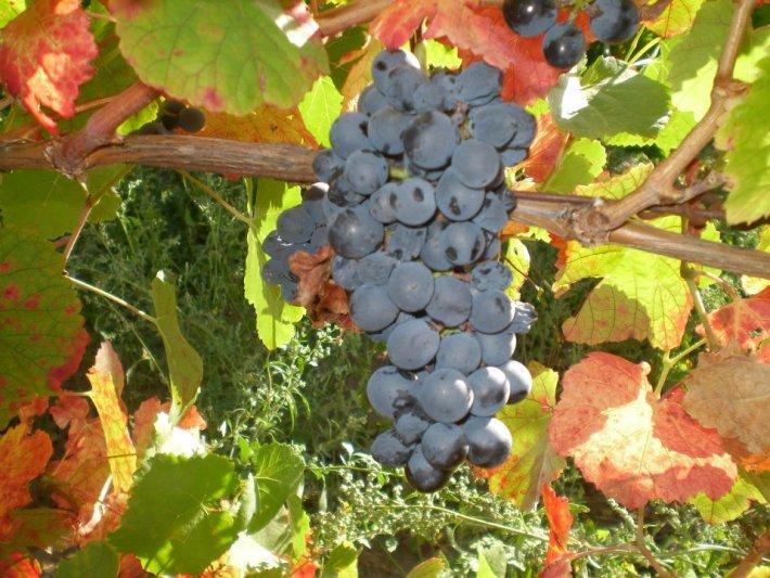 Os Vinhos DOC da Beira Interior na Sub Região de Castelo Rodrigo 2