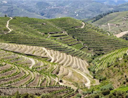 Os vinhos do Concelho de Murça