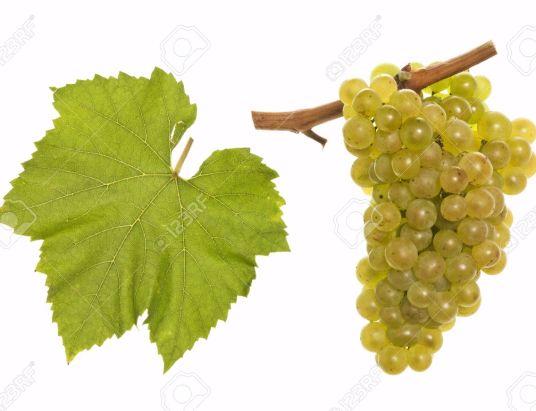 Perfumada e Delicada Casta Branca Chardonnay