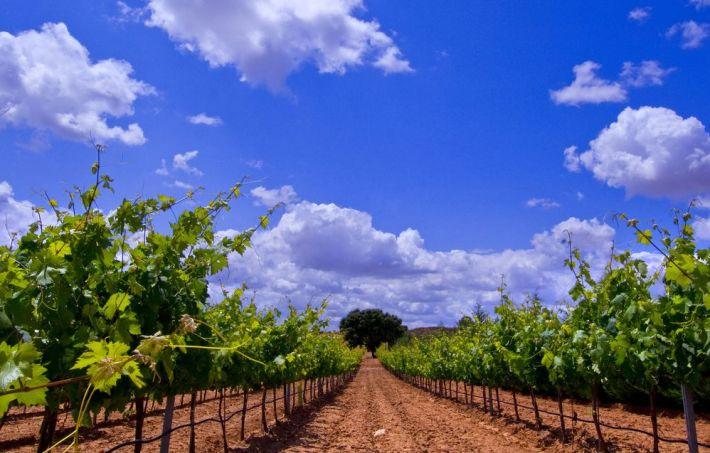 Andres Iniesta de jogador a produtor de vinhos 10