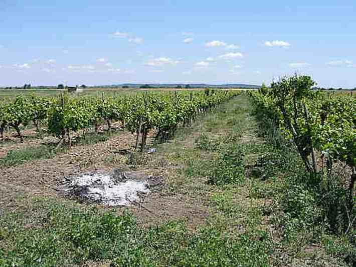 Vinhos com Denominação de Origem Tejo da Sub Região de Almeirim 5