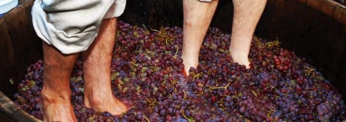 Carpe vinum nos Calcatorium