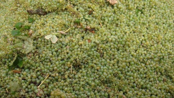 Vinhos com Denominação de Origem Tejo da Sub Região de Almeirim 7