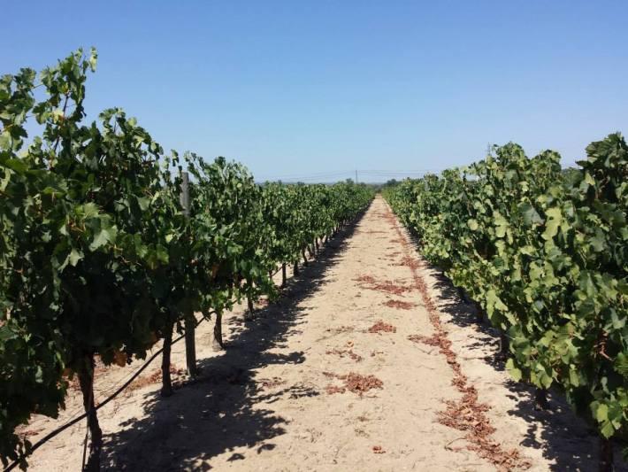 Vinhos com Denominação de Origem Tejo da Sub Região de Almeirim 2