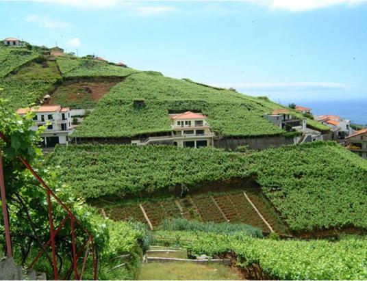 Região do Vinho da Madeira e como se produz