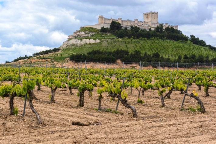 Antonio Banderas um ator que é produtor de vinhos 7